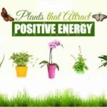 những loại cây mời gọi năng lượng tích cực 0