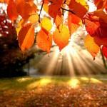 Lập Thu - tiết khí giao mùa đẹp mê mẩn hình ảnh 2